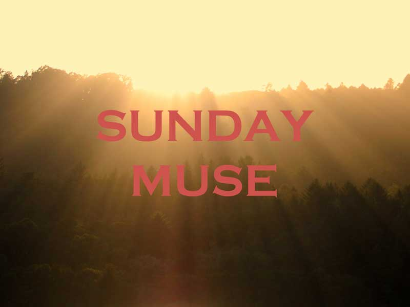 Sunday Muse Scorchio